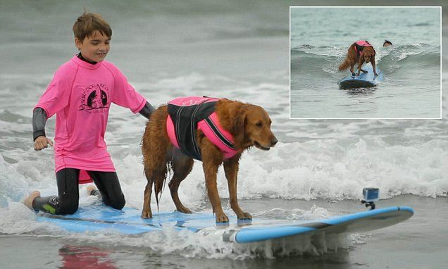 Golden retriever is an expert SURFER and takes disabled children out