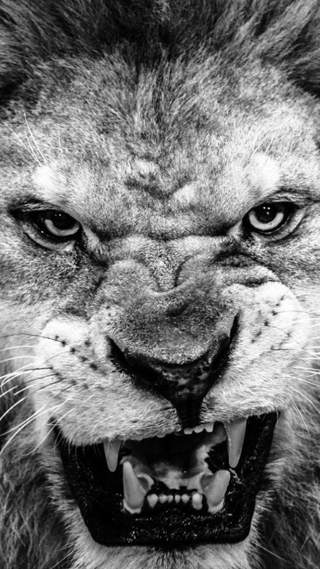 Dark Fierce Wild Lion Animal Macro #iPhone #5s #wallpaper