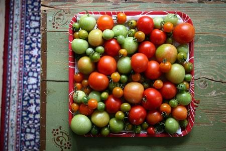 Viimeiset syksyn tomaatit