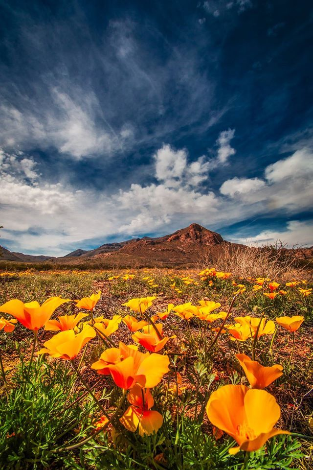 17 Best Images About Where To See Wildflowers On Pinterest