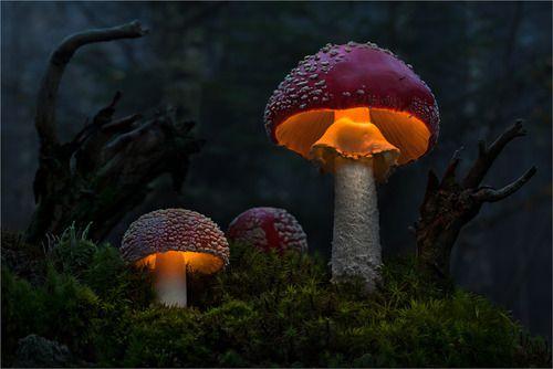 Light Dreams by Moonshroom