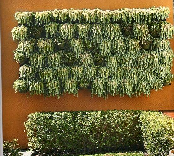 1000 idées sur le thème Tipos De Suculentas sur Pinterest  Plantes