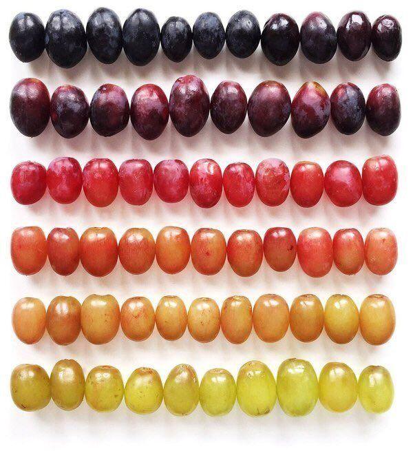 Оттенки винограда