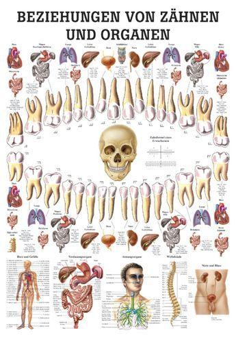 psychosomatik und zähne – Google-Suche                                         … – Nadja Falk