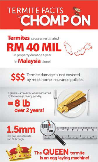 Termites maybe small but the damages that they cause can leave a big hole in your pocket. Learn more about their behavioural biology and how to protect your home and family from this silent killer.  To download the full version of this infographic, please click http://www.rentokil.com.my/files/file_712250.pdf