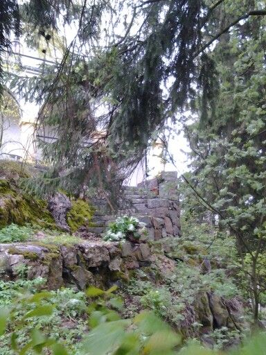Old stairs under the spruce.