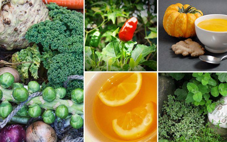 Egal ob Zitrone, Chili oder Ingwer, in unseren Gärten schlummern so manche natürlichen Hilfsmittel, die unser Immunsystem stärken und uns somit vor allerlei Winter-Krankheiten bewahren können.