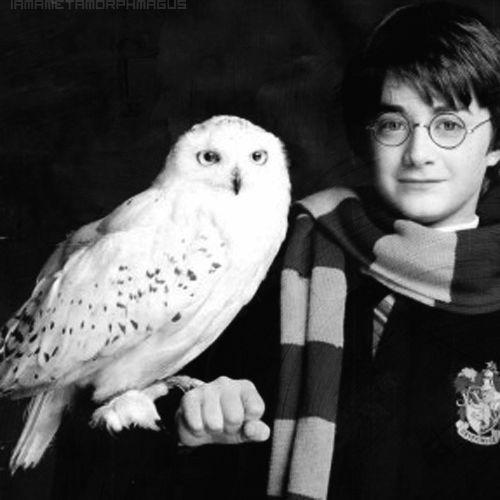 """""""La pérdida de Hedwig representó una pérdida de inocencia y seguridad. Algunas veces, Hedwig fue casi como un adorable juguete para Harry. Que Voldemort la haya matado marcó el final de su niñez. Lo siento... ¡sé que esa muerte molestó a MUCHA gente!"""""""