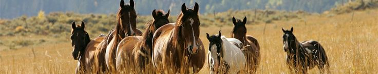 Ranch Horses How To Stock Your Ranch Ranch Horses For Sale in Colorado--Colorado Ranches For Sale | Realestate