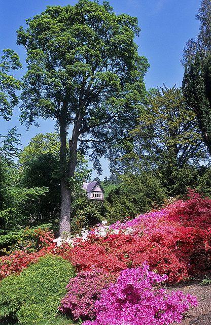 Bodnant Gardens, Conwy, Wales, UK | Bodnant Hall viewed through Flowering Azaleas (4 of 15) | Flickr - Photo Sharing!