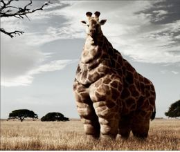 This is what would happen if McDonalds got to the savanna and never left