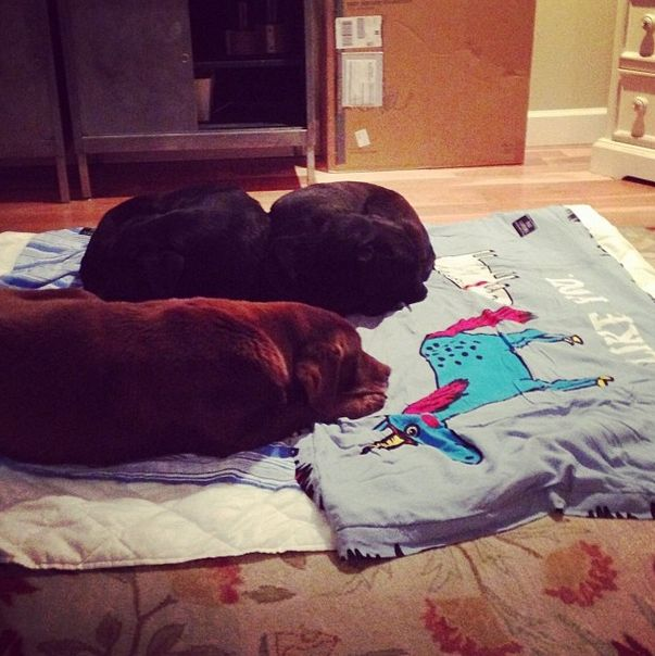 The doggies are snuggling up #theradrug #ilikeyou #kykullo #beachtowel #winterdays www.kykullo.com