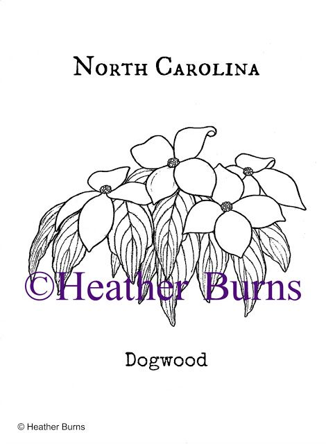 1000 Images About State Flower Coloring Book On Pinterest