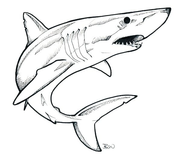 mako shark diagram