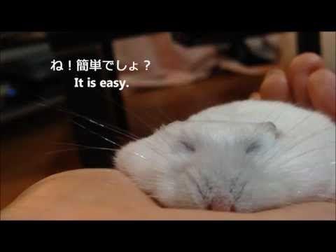 うす~いハムスターの作り方 How to make thin hamster - YouTube