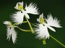 Картинки по запросу причудливые орхидеи