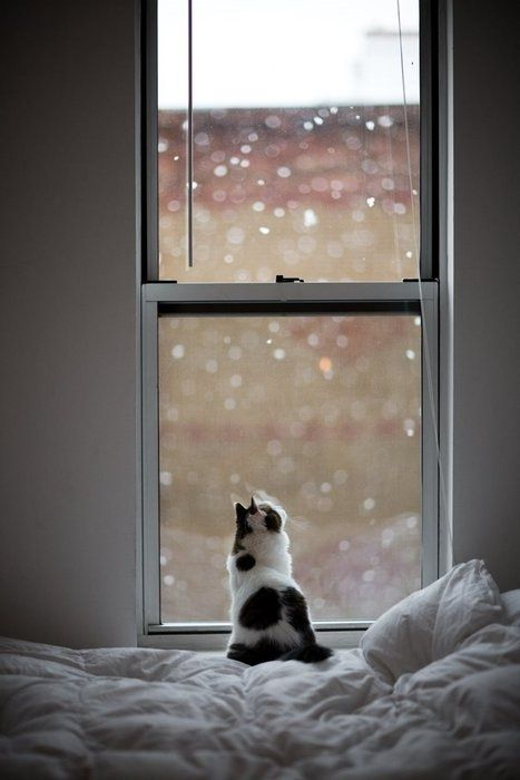 Watching the snowflakes falling