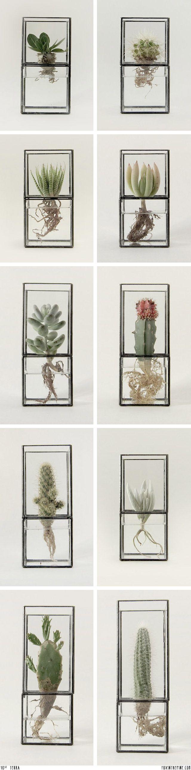 green, water plants