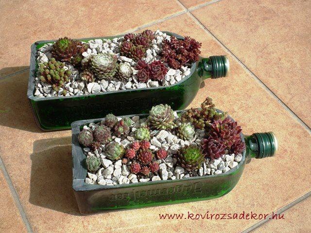 Üvegek újrahasznosítása pozsgásokkal, succulent bottle, houseleeks bottle, Sempervivum in bottle, Kövirózsa Dekor | Kövirózsa Dekor