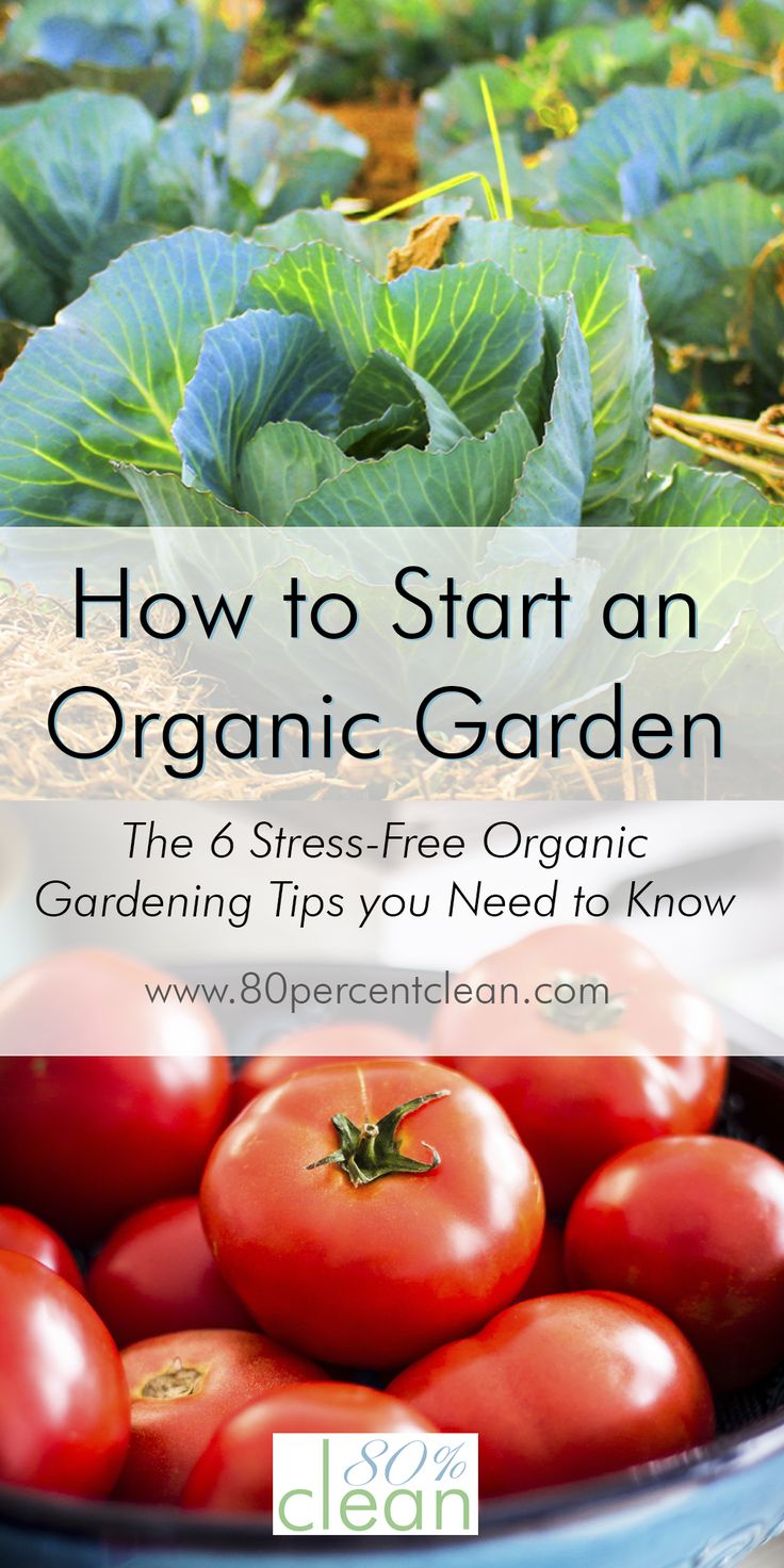 how to start your own organic garden