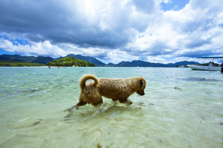 1 of 2 dogs on all of Moyenne Island Seychelles playing in the water & hunting for fish. [OC] [5616 x 3744]