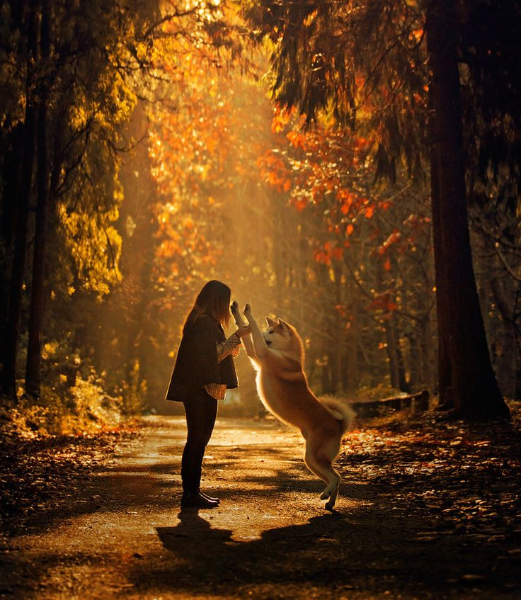 Shall we dance, my love?! Nice wallpaper hd for smartphone #pet #love Wallpapers HD Smartphone ...