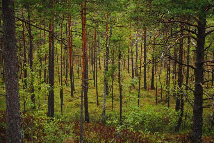Forest in Mölnlycke