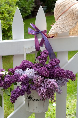 lilacsSpring Flower, Purple, Lilac, Plants, Gardens Gates, Gardens Wedding, Wedding Centerpieces, White Picket Fence, Hanging Baskets