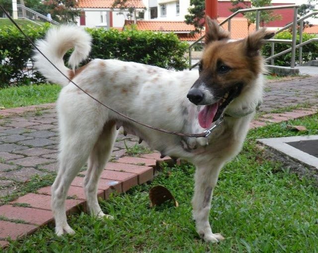how to change dogs microchip information