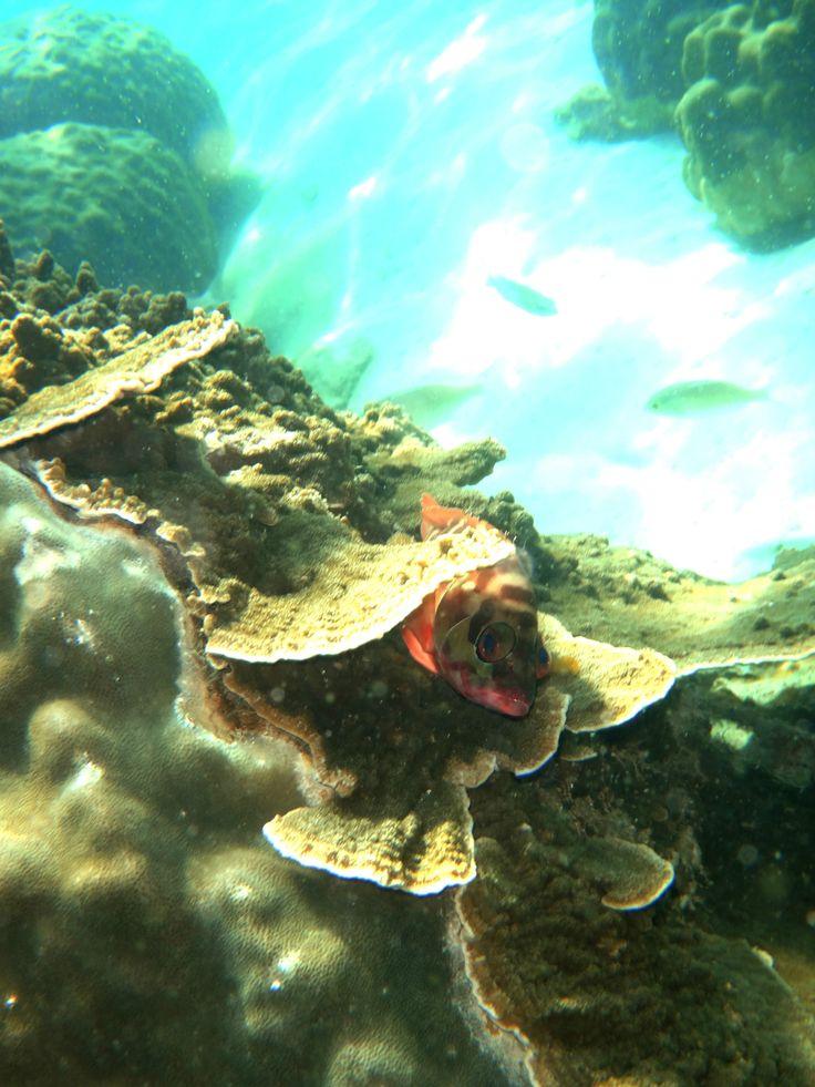 Nice Pink Fish Hidden Thailand