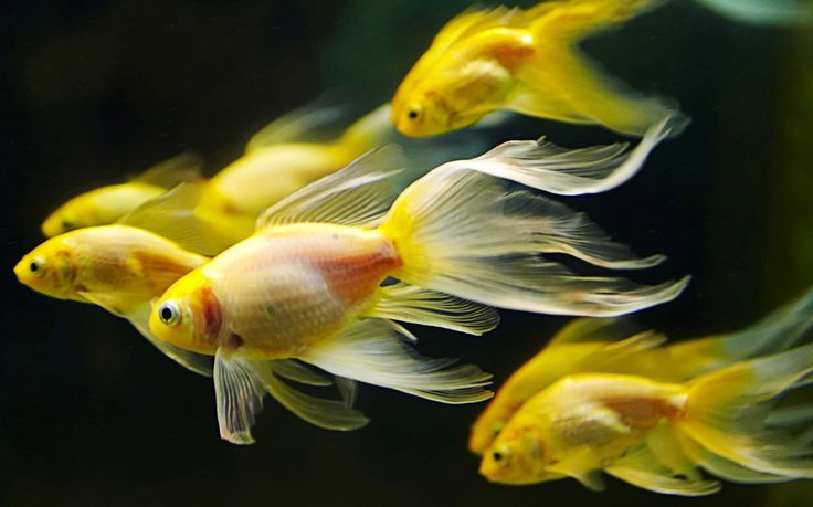 Looking for the best #aquariums for rent in #London? Get in touch with Rent Aquarium.