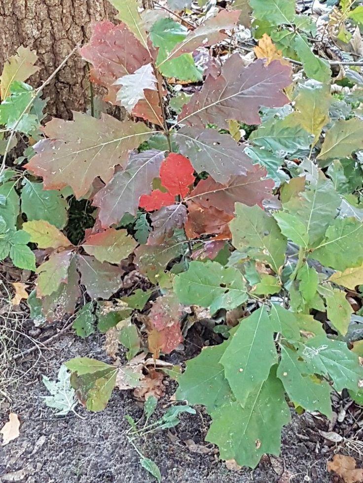 Mooie bronzen herfstkleuren