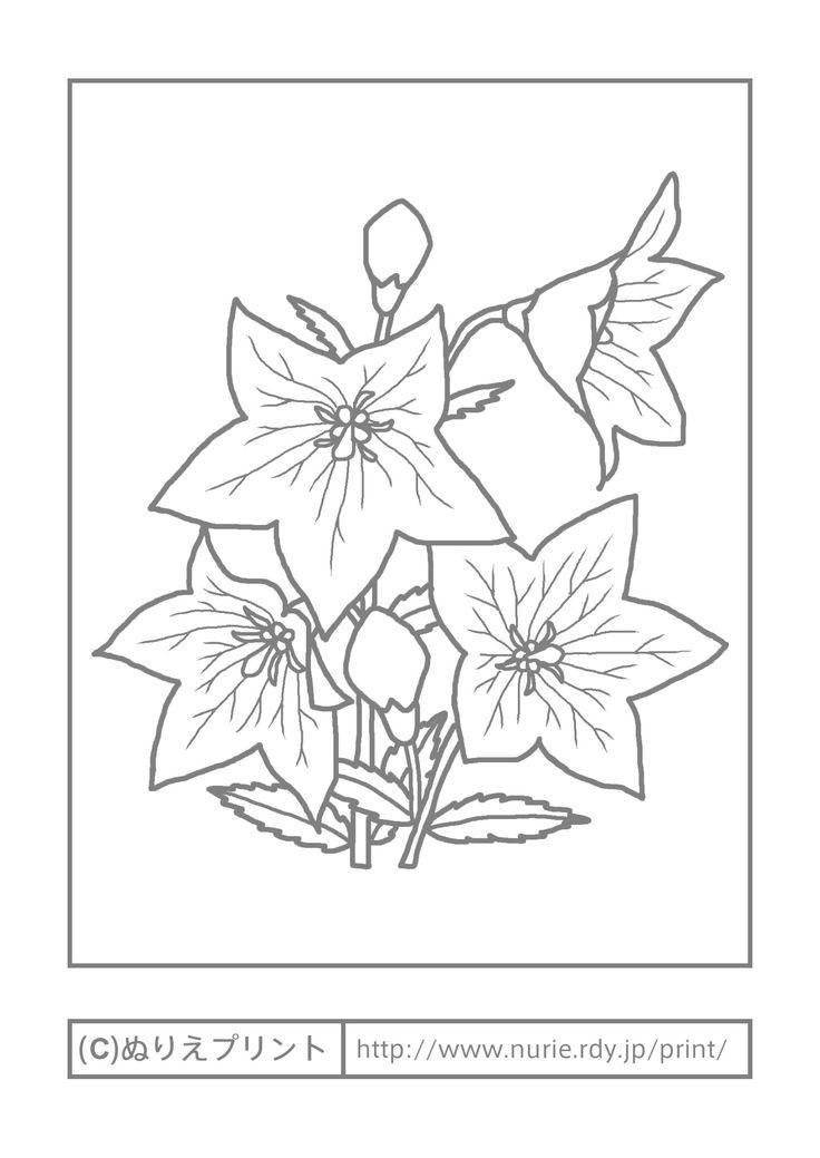 キキョウ(主線・グレー)/秋の花/無料塗り絵イラスト【ぬりえプリント】