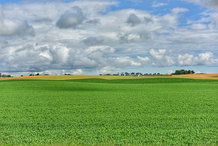 Field, Österlen