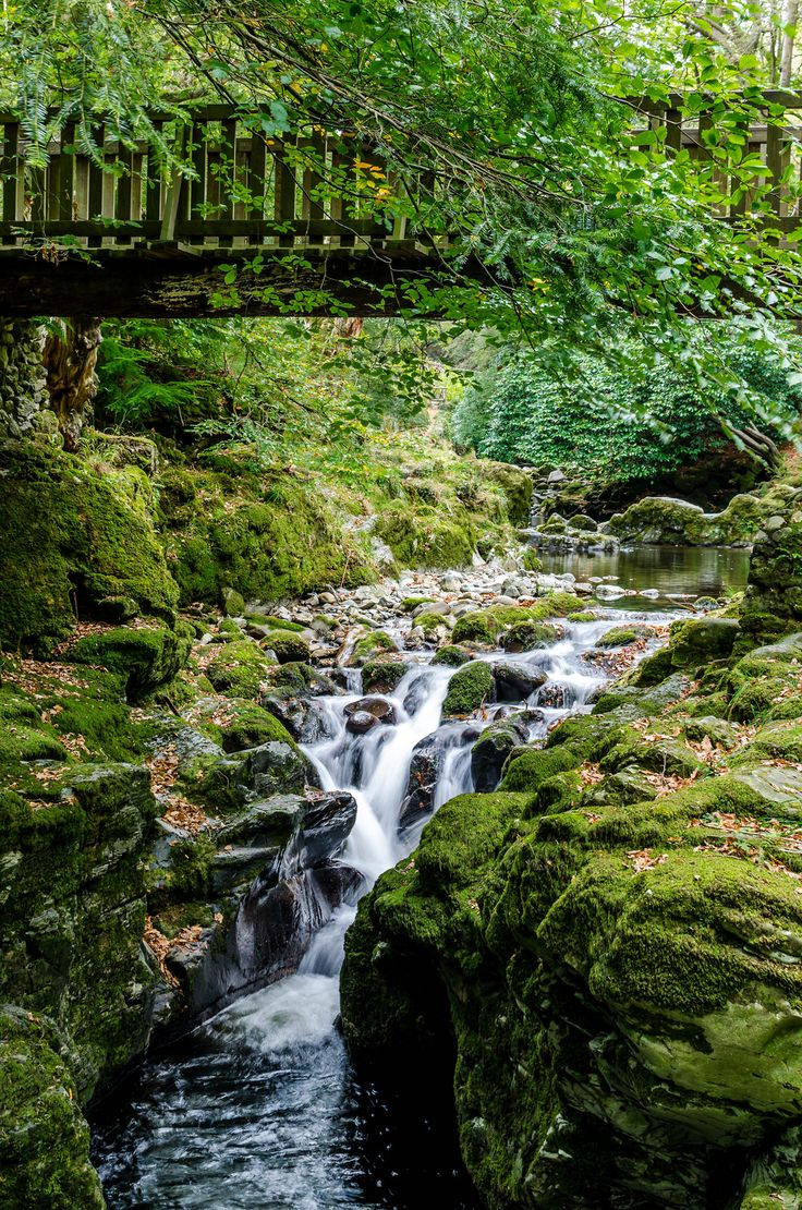 Shimna River, Tollymore Forest Park, Co. Down, Ireland ✯ ωнιмѕу ѕαη∂у