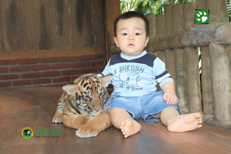 foto with anak harimau di pondok foto satwa @tamansafari2