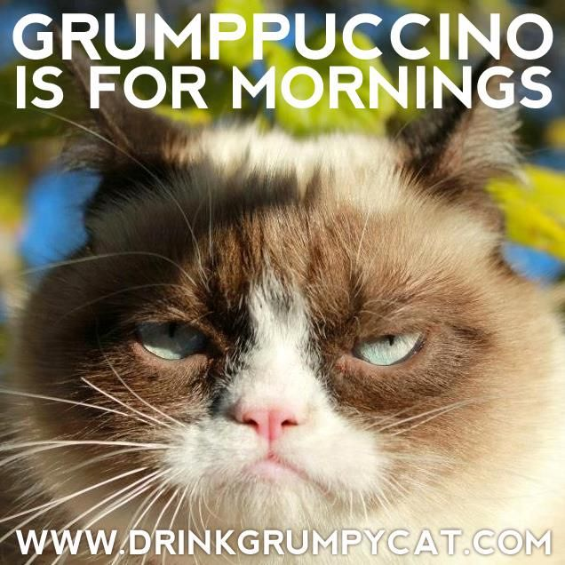 Best GRUMPY CAT Images On Pinterest Grumpy Kitty Funny - 17 cats that are angry grumpy and fed up with everything