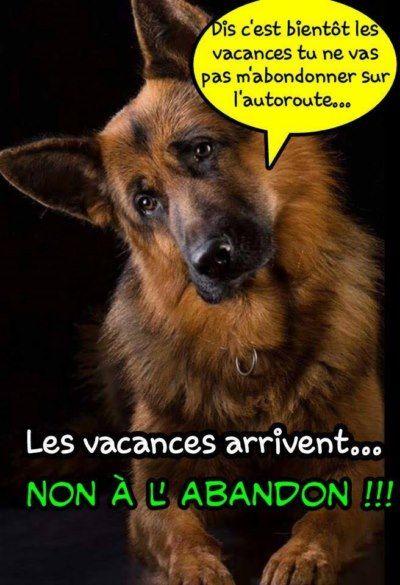 Les blablas de la Présidente de LSF/ Bye bye mon chien... - Galgos martyrs…