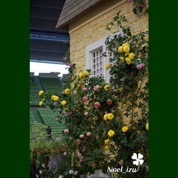 「 キャス・キッドソンの秘密の庭」の中には、行列で入れなかった✨ ##flower  #rose #gardening #japan - @noel_izu- #webstagram: Worth Reading, Flower Rose, Rose Gardens, Book Worth, Rose Gardening, Izu Webstagram, Noel Izu, Gardens Japan
