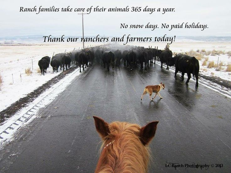"""Ranch families take care of their animals 365 days a year. No snow days. No paid holidays. Thank our ranchers and farmers today!"" - via LC Ranch Photography"