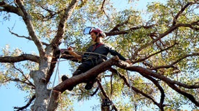 Looking for a tree pruning service company in Perth? #tree_removal_perth #tree_lopping_perth #tree_pruning_perth #mulch_supplies_perth
