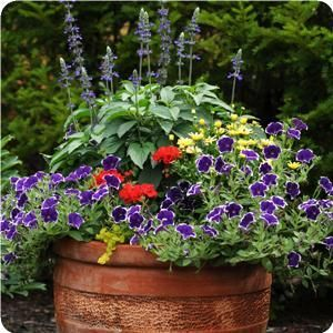 Wish I'd seen this before I planted my containers! This site is AWESOME. photo gallery of containers with instructions to plant and description of flower. Plus perennial containers!