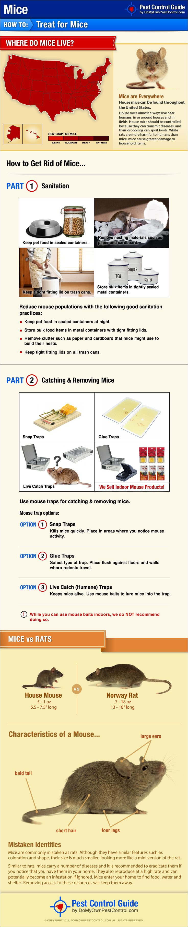 How to Get Rid of & Kill Mice - Mouse Control & Treatment Guide