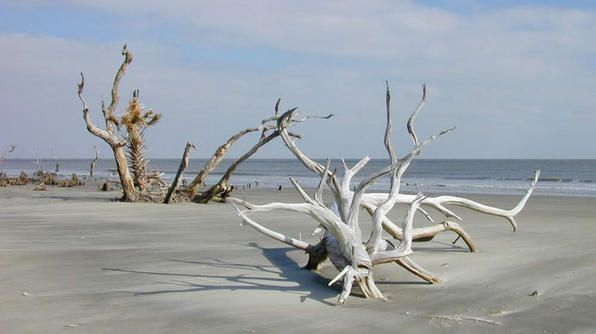 Looking for a bit of solitude? This 7-mile-long undeveloped barrier island and wilderness habitat is the perfect beach to explore.