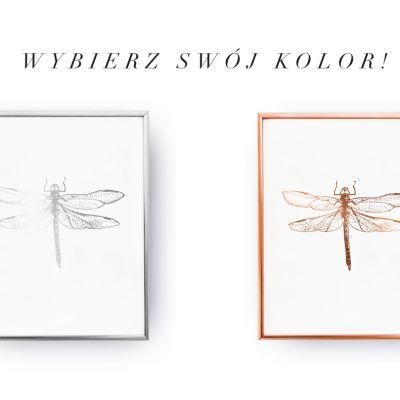 dragonfly_sc_zp