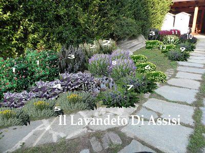 Progetto gratis bordura con aromatiche, lavande e piante perenni www.illavandeto.com