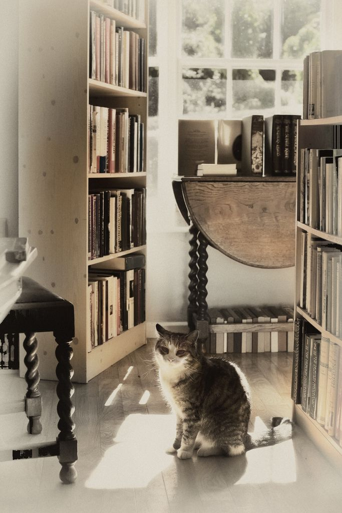 stanleymoss - book shop cat