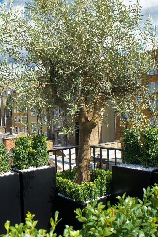 361 best Roofgardens Daktuinen images on Pinterest Rooftop