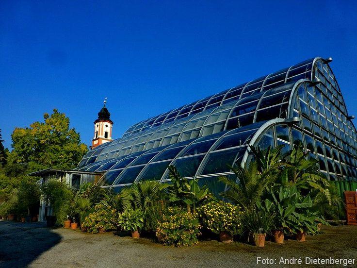 Mainau - Palmenhaus