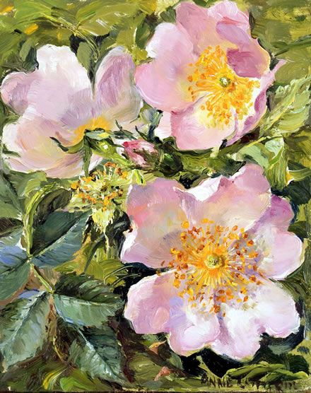 Briar Roses | Mill House Fine Art – Publishers of Anne Cotterill Flower Art
